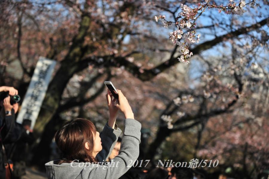 靖国神社 桜撮影