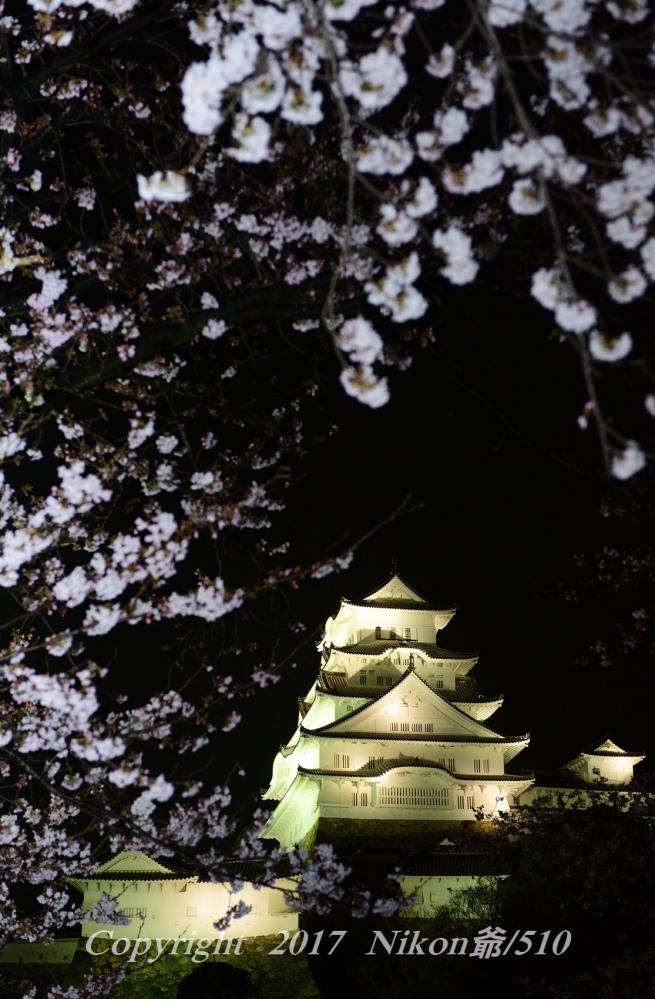 姫路城 ライトアップ D3 (68)SN_filtered