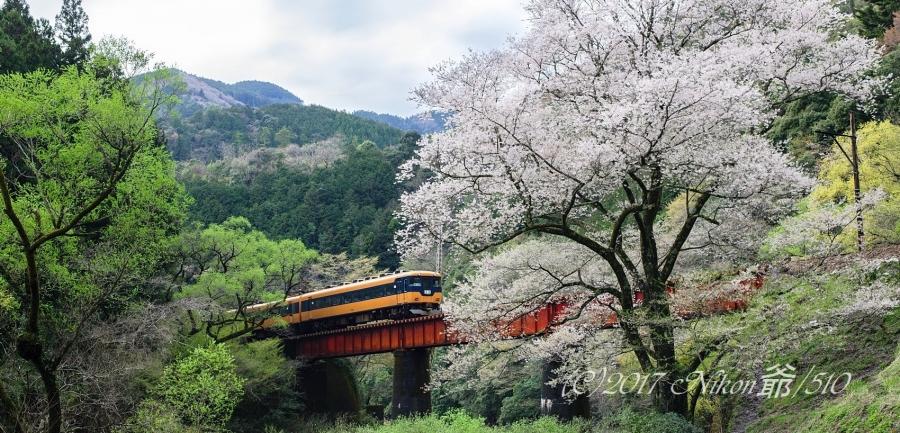 大井川鉄道 黄色 (23)WSFN