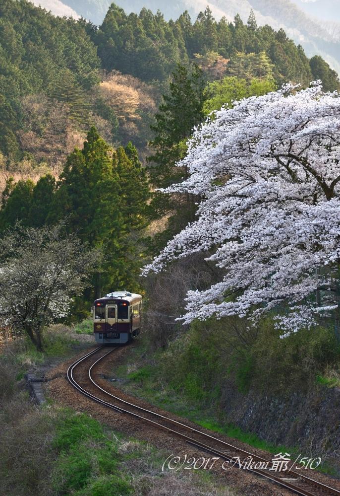 わ鉄の桜 (20)SNF