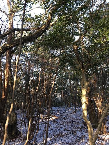 三蔵山/山頂の様子2