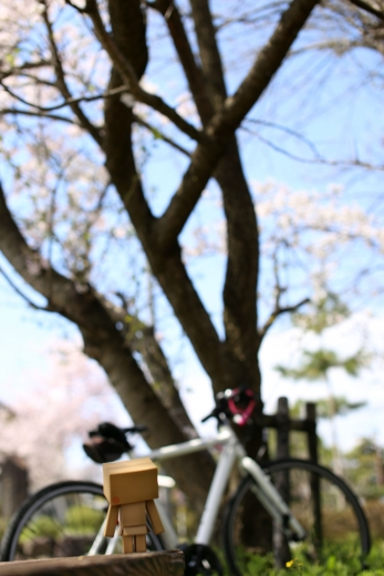 桜とダンボー 01