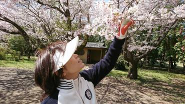 桜チラチラ