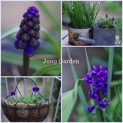 ブルーの花170401