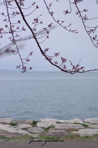 桜170405