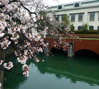 桜170407