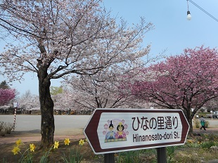 鴻巣公園の桜②20160401