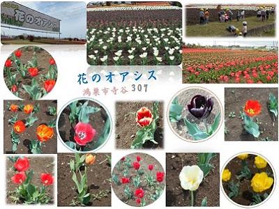 2016年4月 花のオアシスフェア チューリップまつり