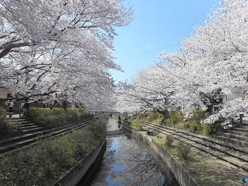 23 元荒川の桜 20170407