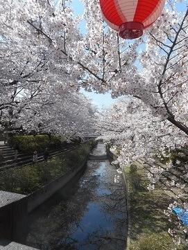 21-2 元荒川の桜 20170407
