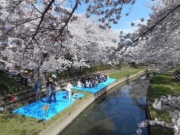 24 元荒川の桜 20170407