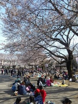 ⑭鴻巣公園 2017年4月2日