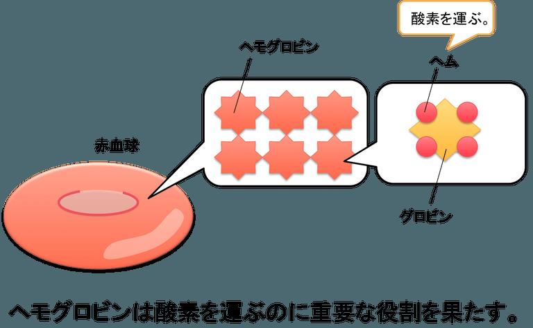 hemoglobin.png
