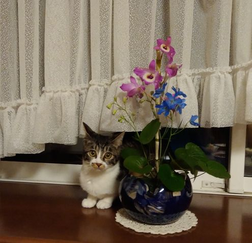 てとらお花