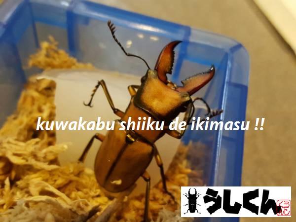 ushikunn298-img600x450-1491126260rvoseb27024.jpg