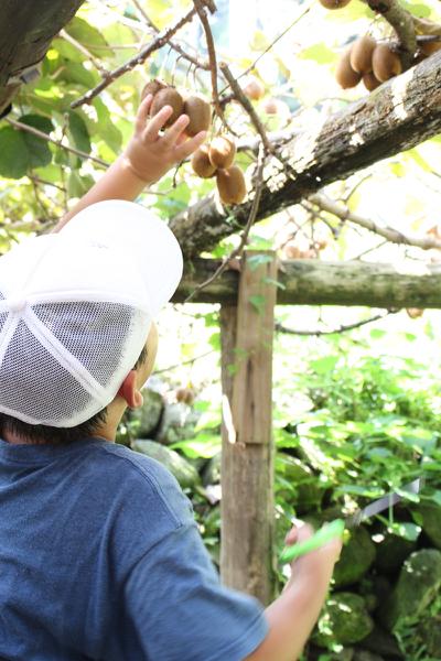 果物狩り2