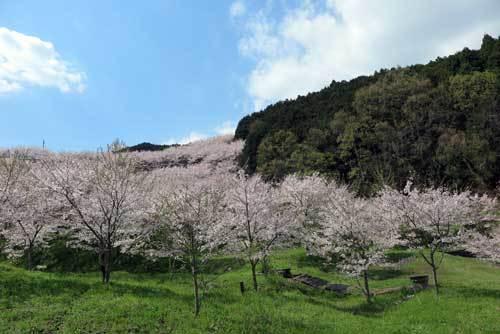 170413桜