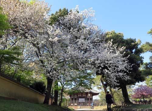170423興福寺