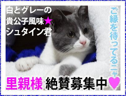 Banner_BoshuShuta406kon