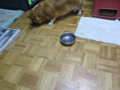 ご飯を散らかした犬