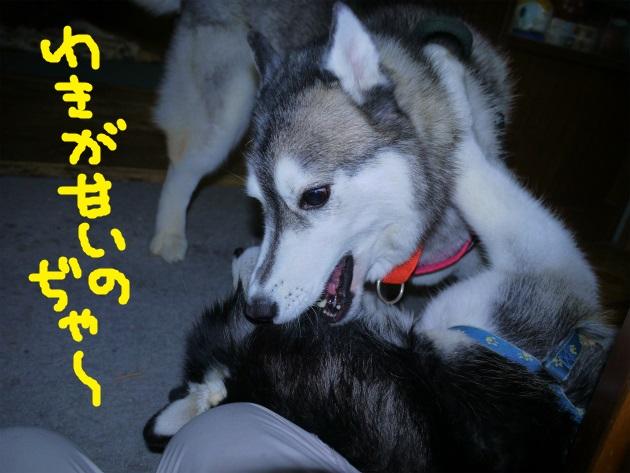 P2010255.jpg