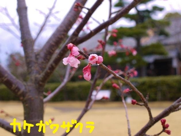 P2050894(1).jpg