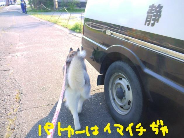 P2090053.jpg