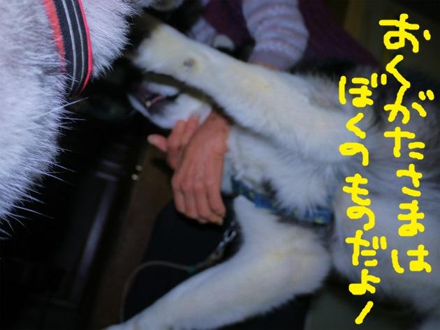 P2090123.jpg