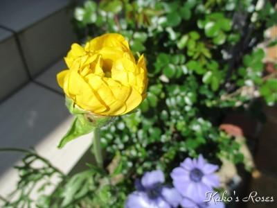 s-IMG_3647k1.jpg