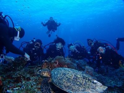 17-03-11 沖縄ツアー カメと2