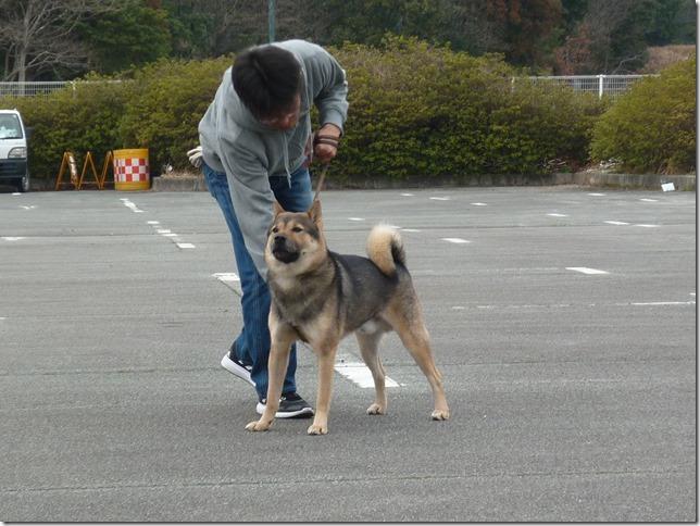 20170305歩様トレーニング-25