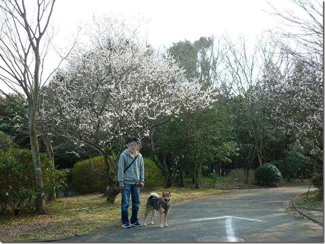 20170319公園新規開拓01-03
