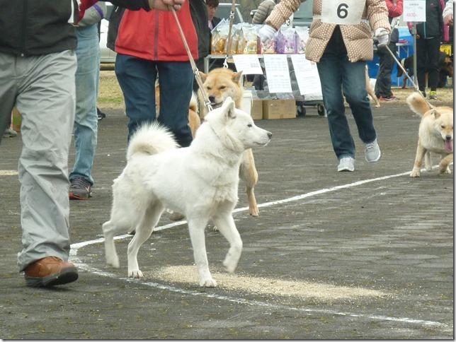 20170326NKC岐阜03-05