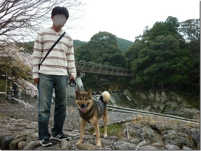 201704桜01-08