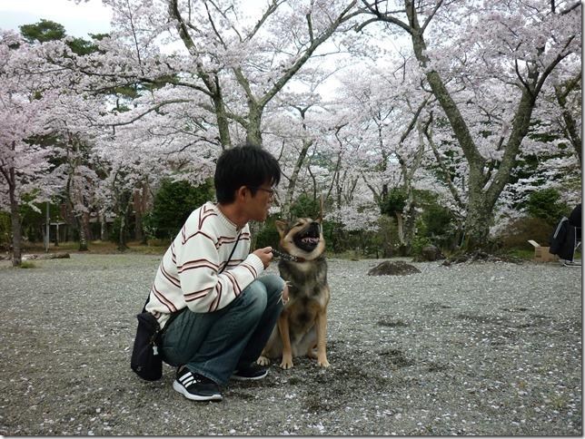 201704桜01-11