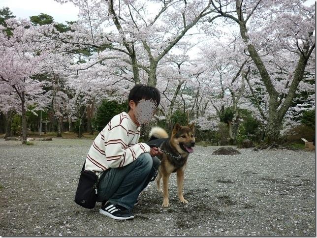 201704桜01-12