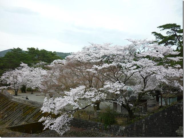 201704桜02-12