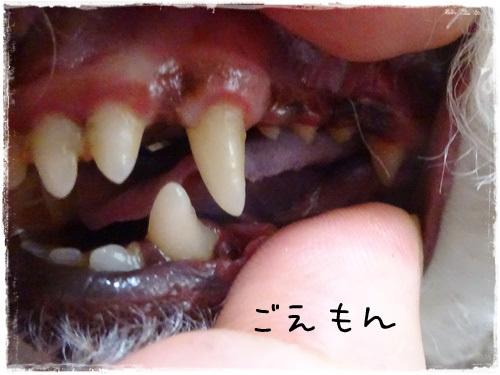 DSC05114g.jpg