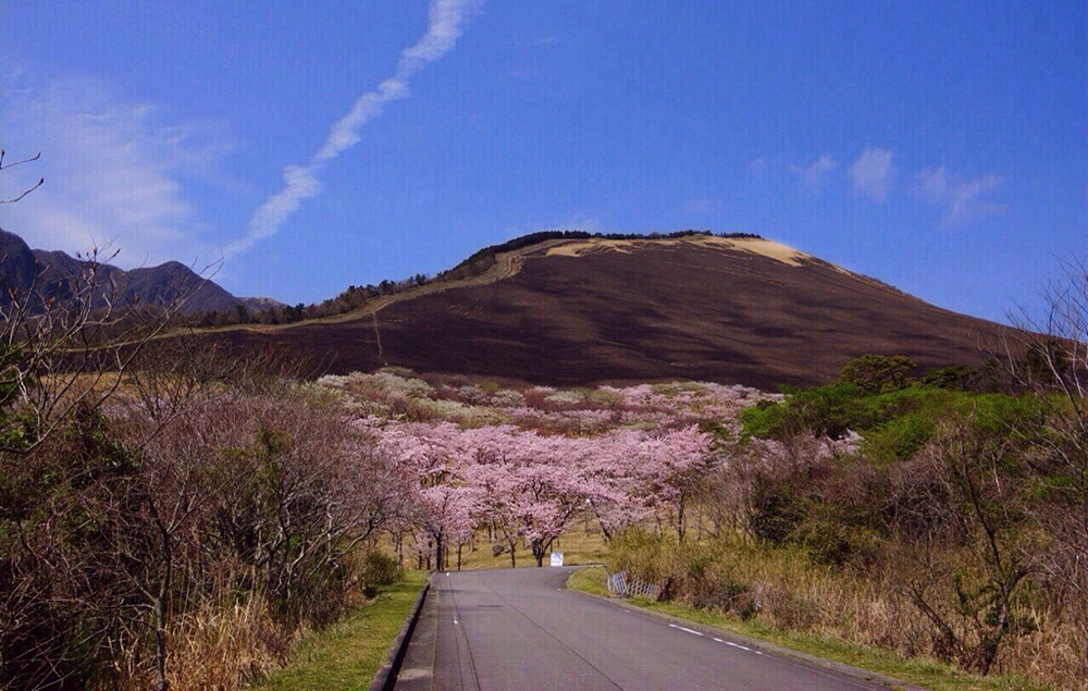 別府市大平山の桜 - 5