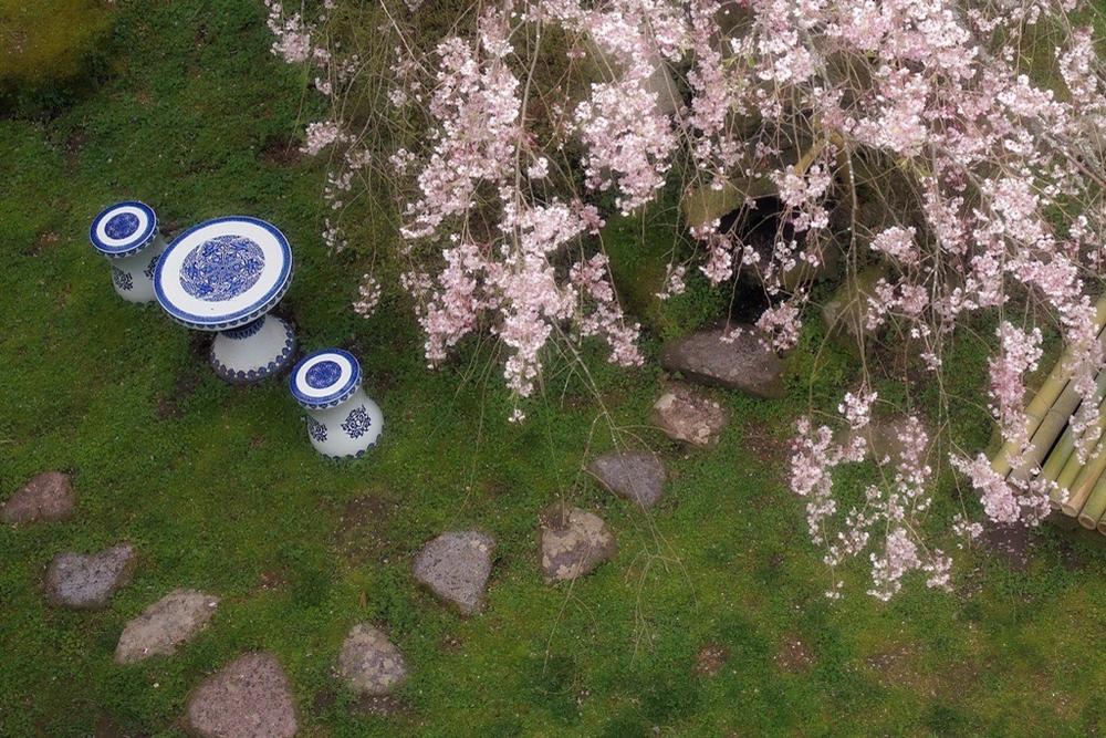 枝垂れ桜4月23日-8