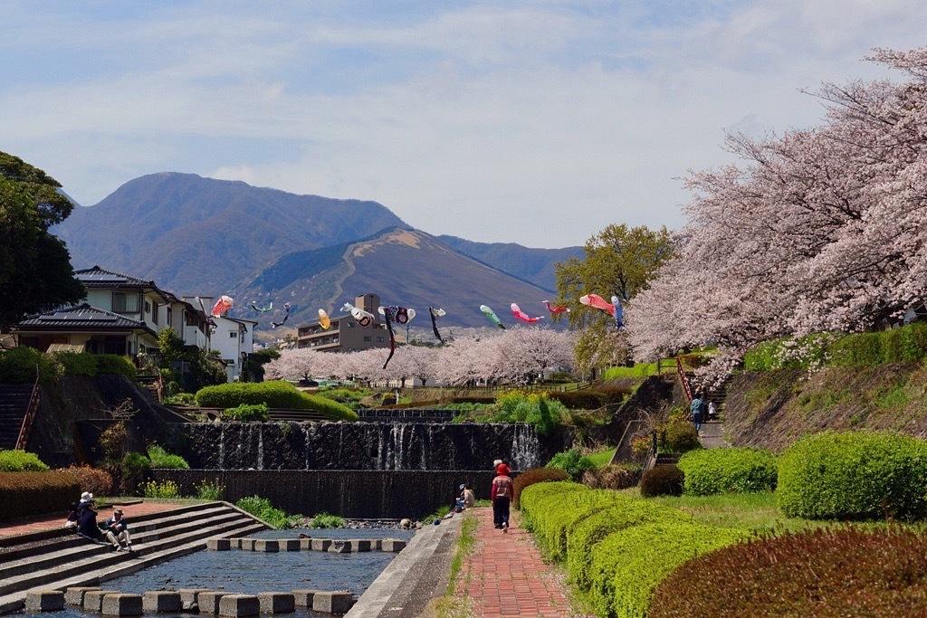 別府市境川の桜8