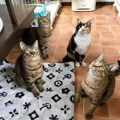 2017.2.25 TOKUさん LYSTAシェルター 4