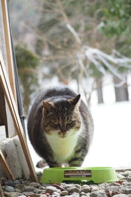 2017.2.8 葛尾村 ぽこ&まちさん 17