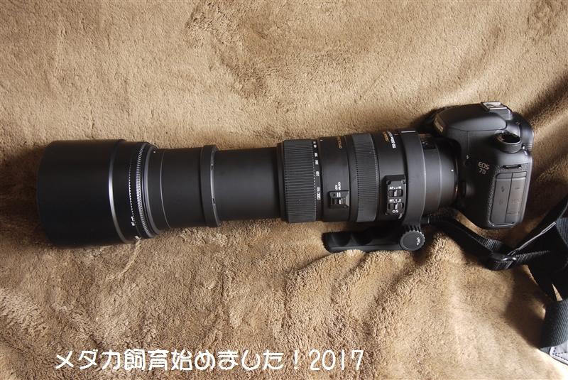 P1120380.jpg