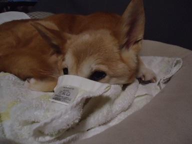 鼻隠しタオル