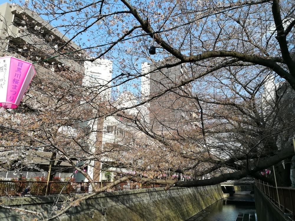 2017-03-29目黒川桜