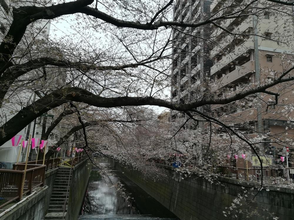 2017-03-31目黒川桜