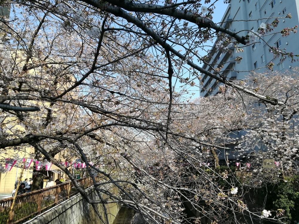 目黒川桜04-04