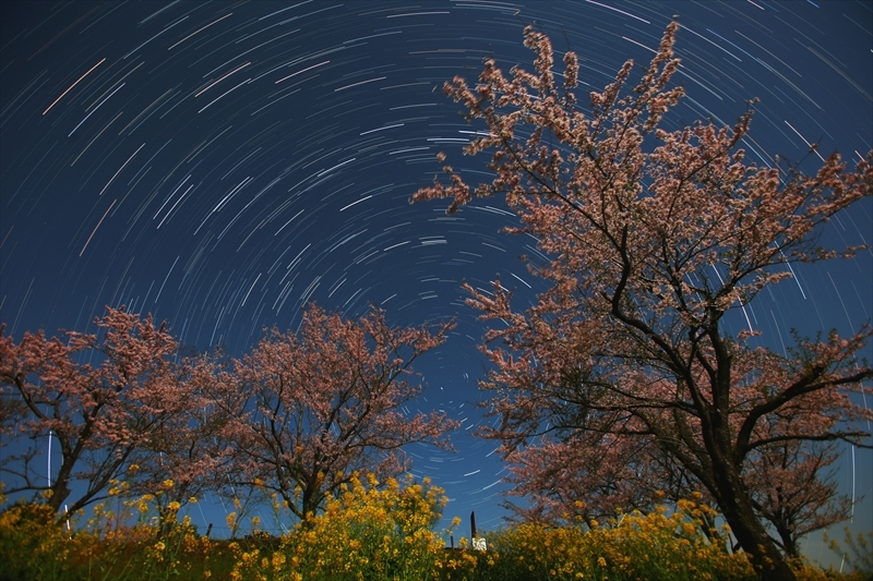 白木峰桜ぐるぐる2