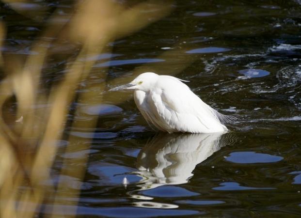 DSC05419洗足池